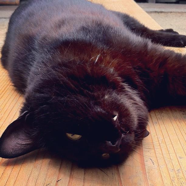 人懐っこいネコ。グテーとのんびり休憩ww
