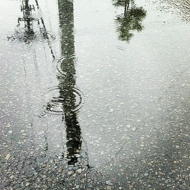 朝から雨。しとしとしとしと