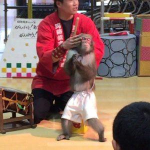 フジグランで猿まわしやってた。かなりの芸達者で、面白かった!熊本の震災被害にもあわれたらしいので、がんばってほしい。日本の伝統芸能を継承していくためにも。 Instagram