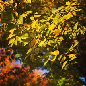 秋ですにゃ。