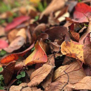 落ち葉がいっぱい。秋ですにゃあ(昨日に続き今週2回目)