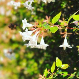 小さき花をポートレートモードで。ところどころビミョーなところもあるけど、面白いなぁ。#iphone7plus #ポートレートモード #被写界深度エフェクト #松山市