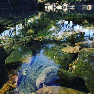 今朝おでかけした重信川沿いの湧水、龍沢泉。キレイな水の中をオイカワがゆらゆら泳いでました。いやぁ、癒やされるなぁ。