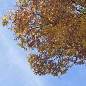 まだまだ秋。寒いけど、まだまだ秋。だと、信じたい。