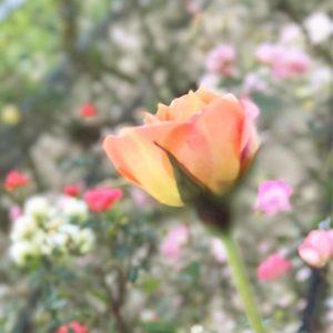 ぷらっと菊間の厄除け寺・遍照院に来てみたよ。そして瓦館でぷらぷらと。のんびりした昼下がり。