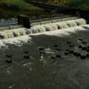 ちょっと前までカラカラのカラ川だったのに、さすがに今朝からの雨で濁流な勢い。でも、まだまだ水不足解消には至らないのでしょう。もう一雨二雨、必要ですね⇒松山市