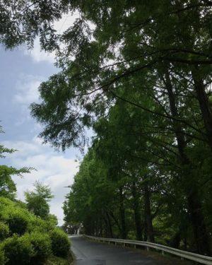 晴れてるけど曇ってて雨?よくわからん天気な、大洲からおはようございます。