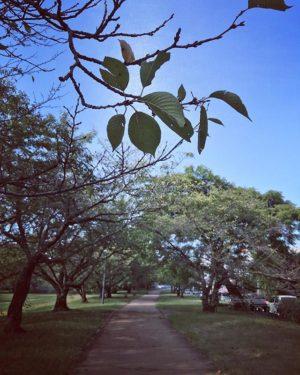 石手川緑地公園の遊歩道の桜並木も、すっかり秋の装いですなぁ。色づく前に散ってしまっているのがなんとももの悲しい。