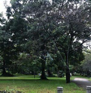 朝から雨な松山市。明日の宮出し、鉢合わせまでには天気が回復してほしいねぇ。