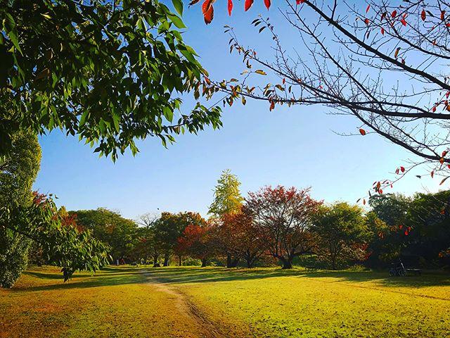 通勤途中の朝の石手川公園。Instagramで思いっきり色調補正してみたら、全然別物になったwww補正後とオリジナル、2つアップするので比べてみてくださいませ。写真って、ウ・ソ・ツ・キ♪#朝 #石手川公園 #補正の力 #写真は嘘つき #色調補正 #色調補正なし #比較 #フィルターの力