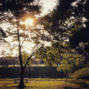 朝の石手川公園。通勤途中にパシャリと。#朝 #石手川公園 #秋 #なんとなくもの悲しい #でも #今日も仕事だがんばろう