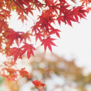 ママんの職場の人たちとバーベキュー。だが、寒いっっっ!そして、いい感じの紅葉を愛でれて満足満足。#紅葉 #バーベキュー #レインボーハイランド #松山市野外活動センター #秋