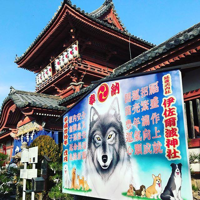 伊佐爾波神社に初詣に来たー。1月2日というのになかなかの人だかり。ぜんざいのお振る舞い、美味しゅうございました。