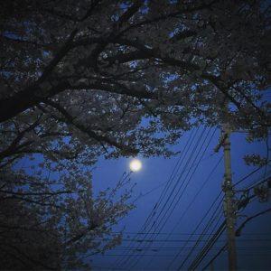 満月、夜桜、電柱の影。風情があるのかないのやらwww#夜桜 #満月 #松山市 #iphone7plus #色イジりまくり