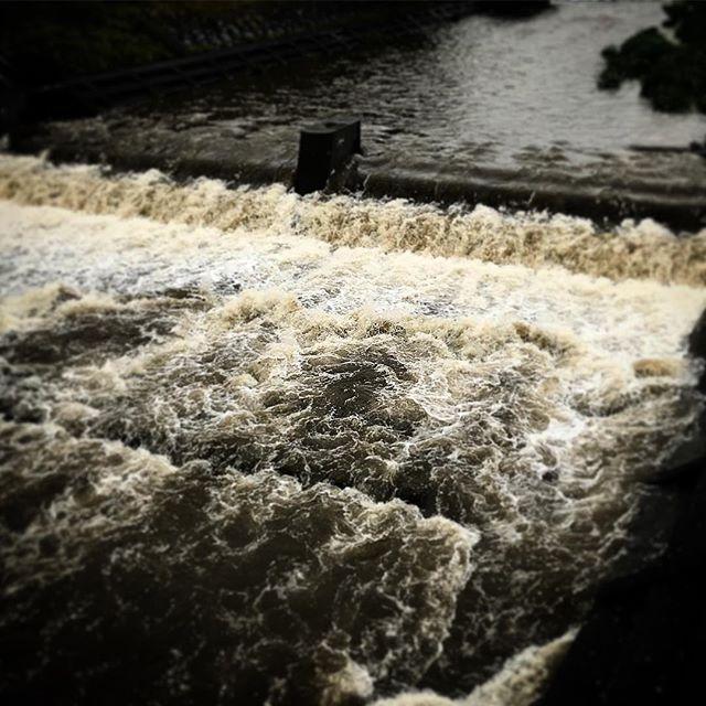 今朝の石手川。昨夜からの雨の影響で水量が増えてます。濁流。