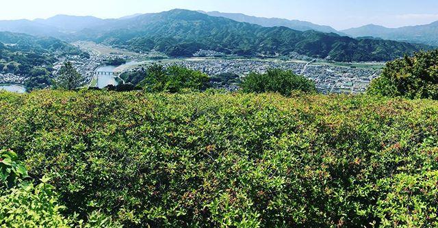 大洲の冨士山公園につつじを見に来た…が…つつじはほとんど散ったあと!残念!でも、新緑と大洲の景色が一望できてなかなかに気持ちいい〜♪