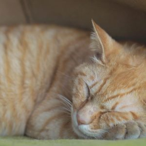 気持ちよさそうに寝てますニャ。のんびりした土曜日の午後ですニャ。