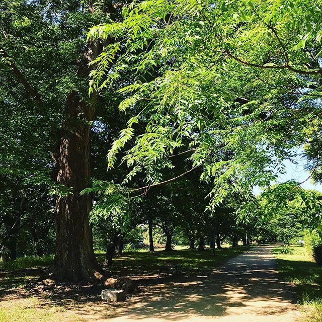 新緑映える、朝の石手川公園。さぁ、6月の始まりですよ!うわぁ、2018年、もうすぐ半分終わるのかよぉぉぉwww