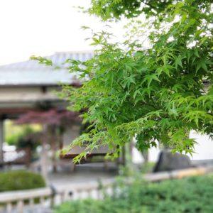 ポートレートモードで撮ってみた松山市の杖の淵公園。久々に行ったけど、風情があっていいわあ。#oppo #r11s #スマホ写真部