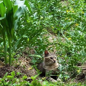 昼下がりのネコ。にゃ。#oppo #r11s #スマホ写真部