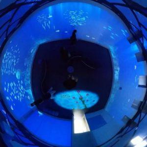 佐田岬の道の駅「伊方きらら館」2Fのきららアクアリウムを全天球動画にしてみました。会議室風の部屋の四方へ海の中の映像がプロジェクションマッピングで投影されます。出てくる魚は佐田岬に生息する魚たちだとか。予想外に楽しめましたっ!#佐田岬 #伊方町 #きらら館 #プロジェクションマッピング #予想外に楽しい