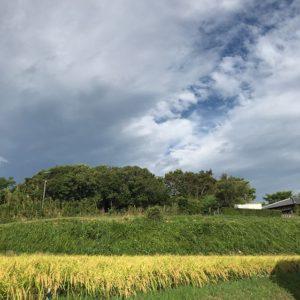 朝の淡路島。台風接近中ですが、まだそれほど影響はない模様。お昼が近づけば雨風が強くなるんでしょうね。皆さま、お気をつけくださいませ。