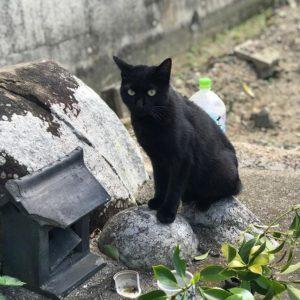 黒ニャンコ♪