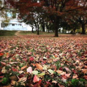何気ない、朝の石手川公園の落葉。