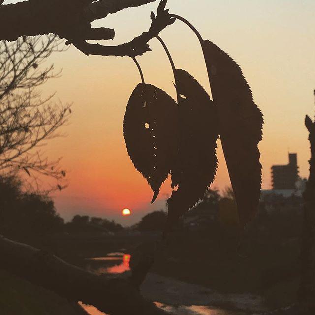 深まる秋の夕日