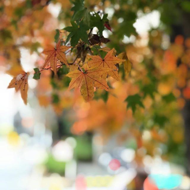 街中の紅葉。iPhone7plusで撮ってみた。XSやXR、Pixelなどの新型にも興味はあるけど、まだまだ頑張ってもらいますよ。