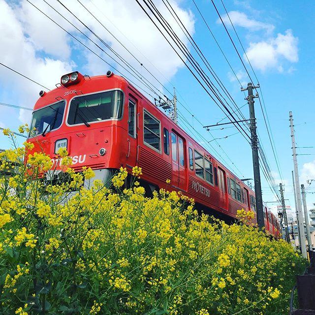 青空、菜の花、オレンジの電車。