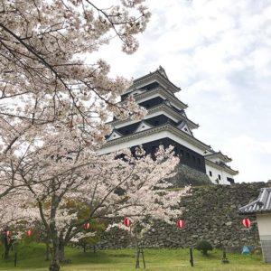 桜満開、大洲城、