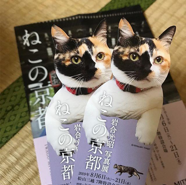 松山三越で開催中の写真展、「ねこの京都」を見に行ってきた。毎回楽しみな岩合さんの写真展。今回もネコの愛らしい姿とネコの暮らしを通して感じられる京都の四季を、存分に堪能しました。そして1Fでナイスクリームを初体験!ココナッツミルクを使って、動物性タンパク質や卵、牛乳を一切使わずに作ったアイスクリーム。爽やかな甘さに口溶けの良さ、後味のすっきり感が絶品!熱中症対策のため振りかけてくれた藻塩がまた、いい塩梅でうまいっっ!これはちょこちょこ食べに行きたくなってしまうっ!10月まで三越に出店中ですよー。#岩合光昭 #ねこの京都 #松山三越 #毎回楽しみ #写真展 #ナイスクリーム #nicecream #ココナッツミルクアイス #絶品スイーツ