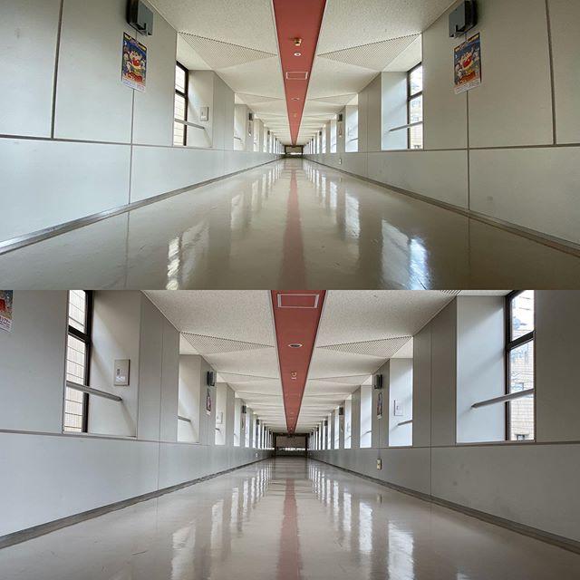 とある公的施設の渡り廊下。同じ位置からiPhone 11の広角、超広角で撮り比べ。上が超広角13mm、下が広角26mm。超広角の遠近感と消失点の奥行き感がスゴい!歩けば1分もかからない渡り廊下が、メチャメチャ長く感じるwww超広角の世界は、面白いねぇ。