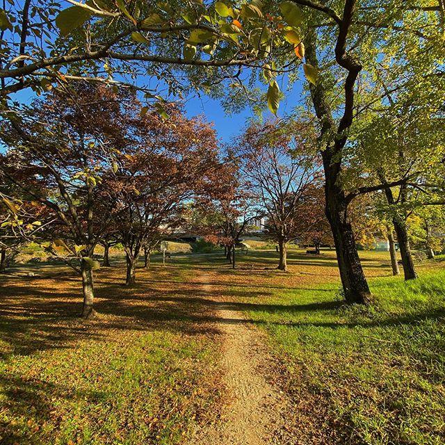落葉広がる公園の径。マイアサウラ移り変わる景色を見られることの素晴らしさよ。