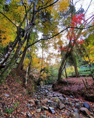 せせらぎに水が流れてたら風流だったんだけどなぁ。残念。でも、いい景色を見れましたので満足。#紅葉 #紅葉デート #愛媛県 #伊予市 #えひめ森林公園 #秋 #落ち葉 #枯れ葉