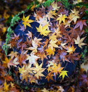ふらっとドライブして紅葉探し。#紅葉 #紅葉デート #愛媛県 #伊予市 #えひめ森林公園