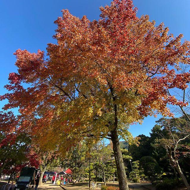 道後公園の木々は見事に色づいてます。そして、今日は朝から次女の表彰式に参列。ありがたいことに、俳句で特選に選んでいただきましたっ。感謝。