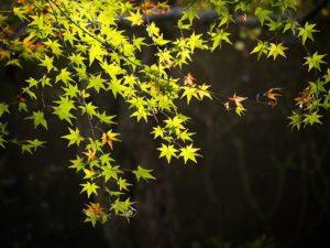 奥道後、移ろいゆく季節。秋から冬へ。#奥秋2019 #紅葉 #紅葉 #奥道後壱湯の守 #奥道後 #湧ケ淵