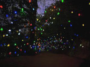 道後公園で開催中のライトアップイベント「ひかりの実イルミネーション」を見に行ってきた。少しライトの明るさが弱め?だったけど、なかなかに幻想的な景色でした。1月19日までなので、まだ見てない方はお早めにー。