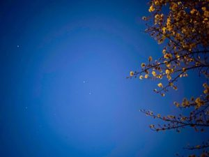夜桜と星。#愛媛県 #松山市 #石手川公園 #桜 #夜桜 #星 #夜景 #iphone11 #ナイトモード