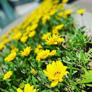 良い天気だ。花もきれいに咲いている。コミセンも入場者の人数制限や間隔を開けたりと3密対策しながら、部分的に再開しています。