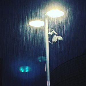 昨日の夜の雨。大雨警報が出るほどの雨でしたが、明けて今朝は雨も上がり晴れになる予報。ありがたや。