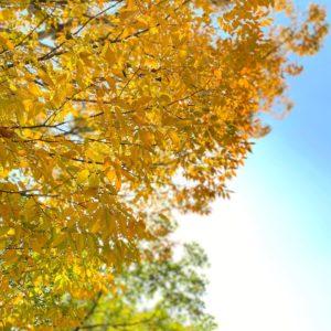 秋晴れないいお天気です。本日、絶賛お仕事中ですが、何か?