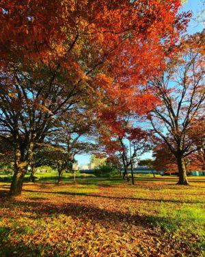 今朝の石手川緑地公園。すっかり秋模様。