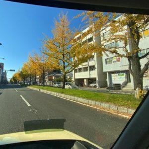 平和通りの車窓から。色づき始めた銀杏並木。