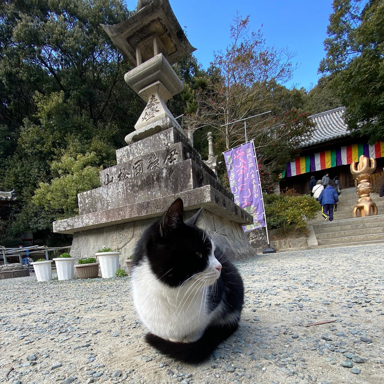 石手寺お詣り。