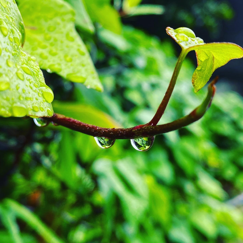 最近ウマ娘やら競馬やらのネタばっかりだから、たまには写真撮ってアップしとこ。雨上がりの昼下がり。